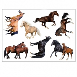 Stickers muraux cheval