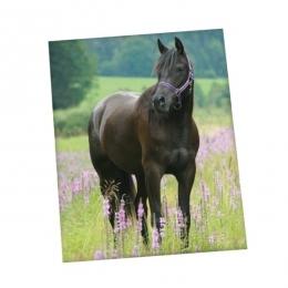 Couverture Polaire Cheval Noir