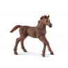 Figurine Poulain Pur-Sang Anglais Schleich