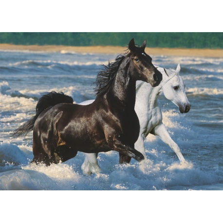 photo cheval sur la plage