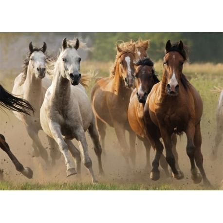 Puzzle horde chevaux sauvages 1000 pi ces paradis du cheval - Dessin de chevaux sauvage ...
