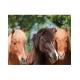 Puzzle Chevaux Amitié Equestre 100 pièces